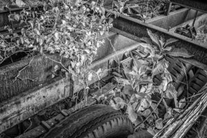 Old Steel - Gone to Seed