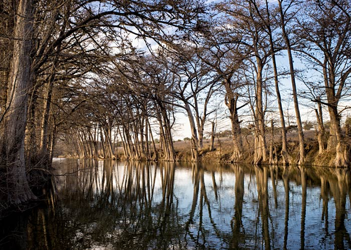 Cypress Trees, Medina River - Central Texas Hill Country